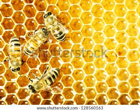 bees work on honeycomb - stock photo