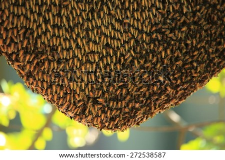 Bees working,  Bee,  Bees,  honey comb,  Bee hive, Honey. - stock photo