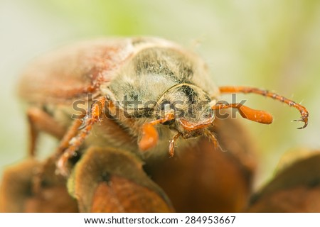 Beetle - stock photo
