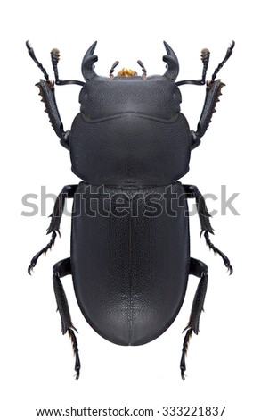 Beetle Dorcus parallelipipedus on a white background - stock photo