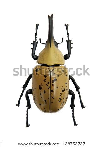 Beetle Dynastes granti - stock photo