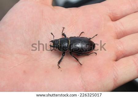 Beetle on the hand - stock photo