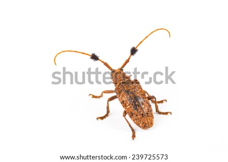 Beetles in Thailand - stock photo