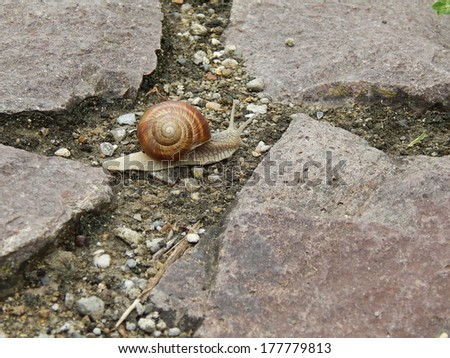 Before snail crossroads in the woods - stock photo