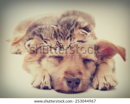 beige puppy and kittens sleeps - stock photo