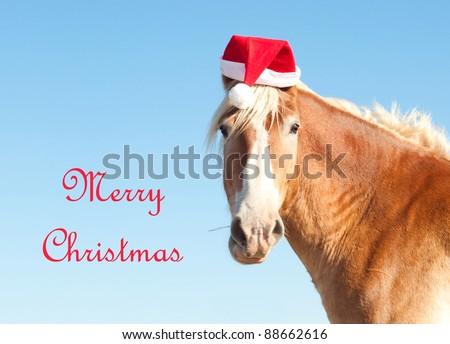 Wearing a Santa Hat
