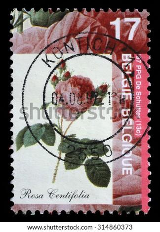 BELGIUM - CIRCA 1997: A stamp printed by Belgium shows Rose, Rosa centifolia, circa 1997. - stock photo