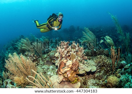 Belize Coral Reef - stock photo