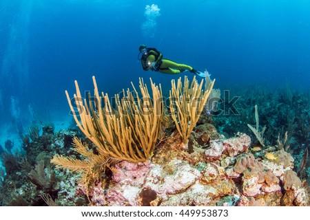 Belize Scuba Diving - stock photo