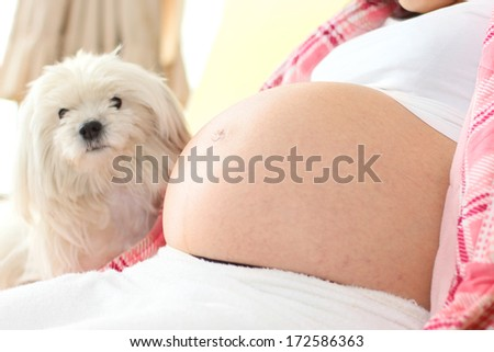 Belly of a Very Pregnant Woman with a dog in the background, in narrow focus - stock photo