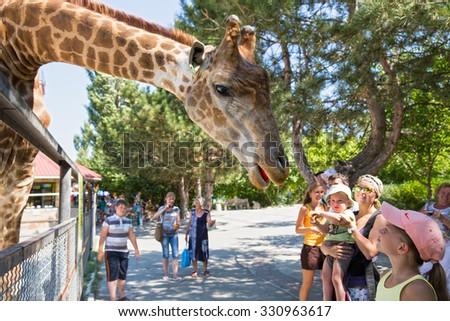 """BELOGORSK, RUSSIA - SEPTEMBER 06, 2015 - Safari park """"Taigan"""". Park visitors looking at a giraffe and feed him fruits - stock photo"""