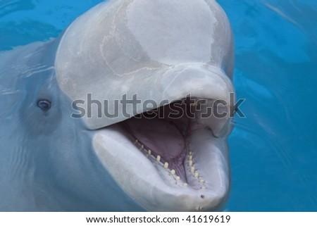 beluga whale Marineland, Ontario - stock photo