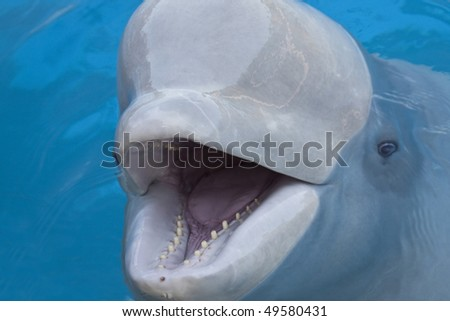 beluga whale Marineland, Ontario - stock photo