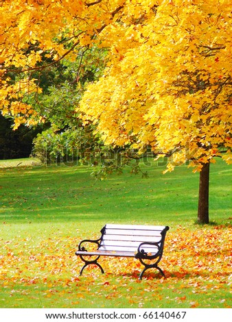 Bench and maple in city park in the autumn - stock photo