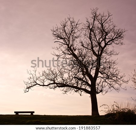 Bench and tree silhouette in the evening light - stock photo