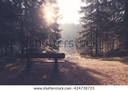 Bench at the forest lake - stock photo