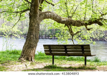Bench Beneath a Tree by the Water - stock photo