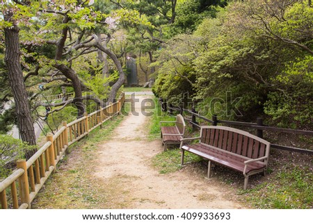 Bench in a park in Sakura fall. walking path - stock photo