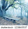 bench in forest - stock photo