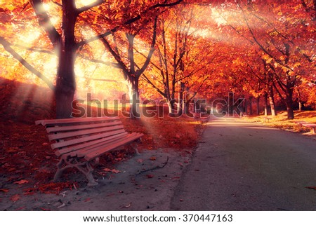 Bench in park and trees in red autumn color. Sunlight between the branches - stock photo
