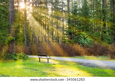 Bench in the green city park with shining sun and rays - stock photo
