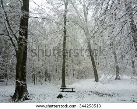Bench in winterly Woods - stock photo