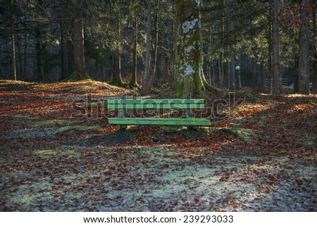 Bench resting place in the forest with sun rays penetrating through the woods.  Lovely resting place in Bohinj. - stock photo
