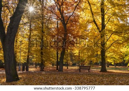Bench under a autumn tree in the city park of Prague, Czech republic - stock photo
