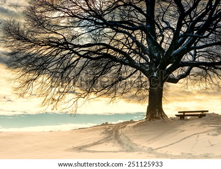bench under a tree in winter season - stock photo