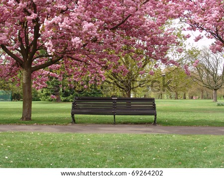 Bench under pink blossoms in Greenwich Park, London - stock photo