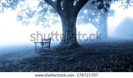Benches and trees in fog, behind Dickey Ridge Visitor Center in Shenandoah National Park, Virginia. - stock photo