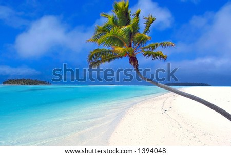 Bending Palm in the Cook Islands - stock photo