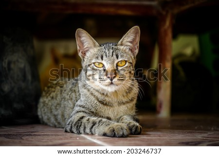Bengal cat. - stock photo