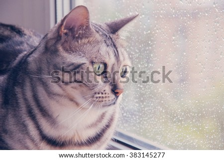 Bengal cat sitting on the window-sill during the rain - stock photo