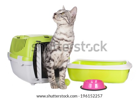 Bengal cat with basic equipment isolated - stock photo