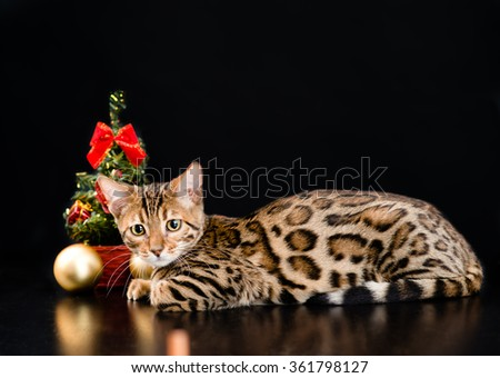 Bengal cat with christmas tree on dark background - stock photo