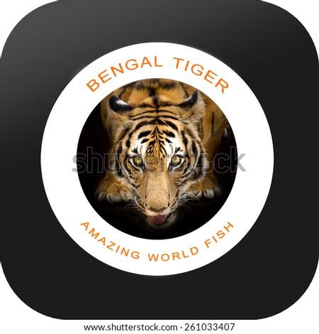 Bengal tiger Roaring - stock photo