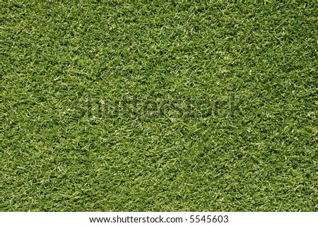Bent Grass Background - stock photo