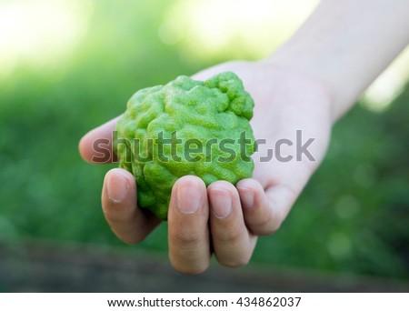 bergamot on woman hand - stock photo
