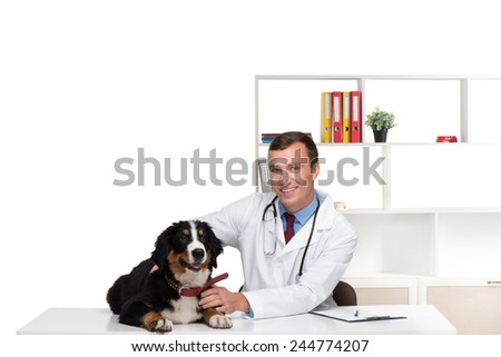 Bernese mountain dog and smiling doctor in veterinarian clinic - stock photo