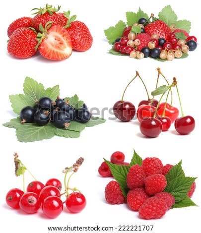 Berries collection - stock photo