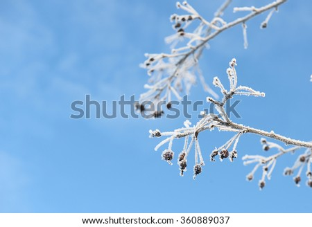 berries covered with ice crystals - stock photo
