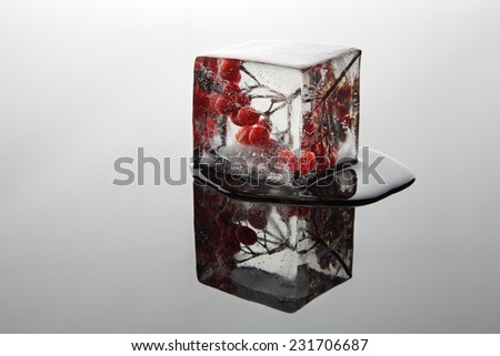Berry in the ice (viburnum) - stock photo
