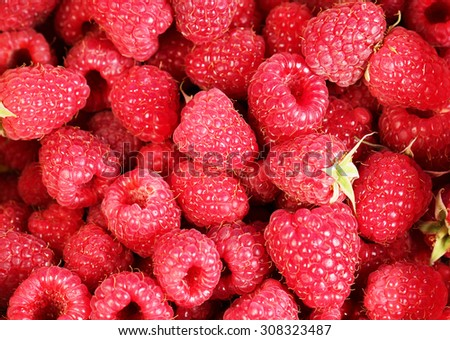 Berry raspberry - stock photo
