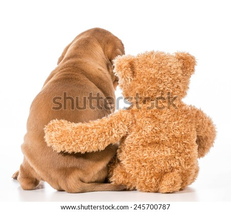 best friends - dog and teddy bear with arms around each other - stock photo