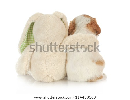 best friends - stuffed rabbit with arm around cavalier king charles spaniel puppy on white background - stock photo