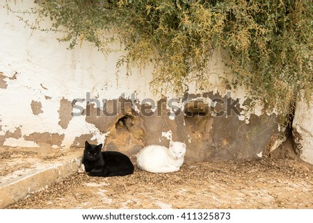 Best friends: Two cats, one black and one white, laying back to back on the streets of Portugal in bright sun - stock photo