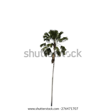 Betel palm isolated on white background, clipping path included. - stock photo