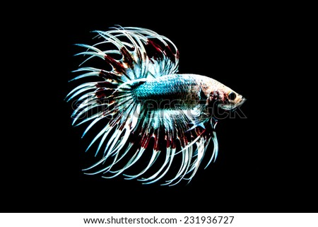 Stock images similar to id 31334068 fish scales background for Black betta fish