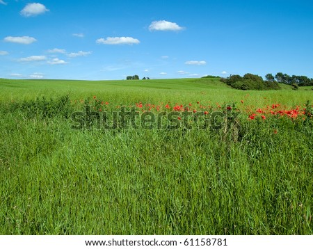 Beutiful lush green field background with clear summer blue sky - stock photo